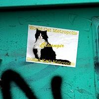Cihangir World Cat Metropolis