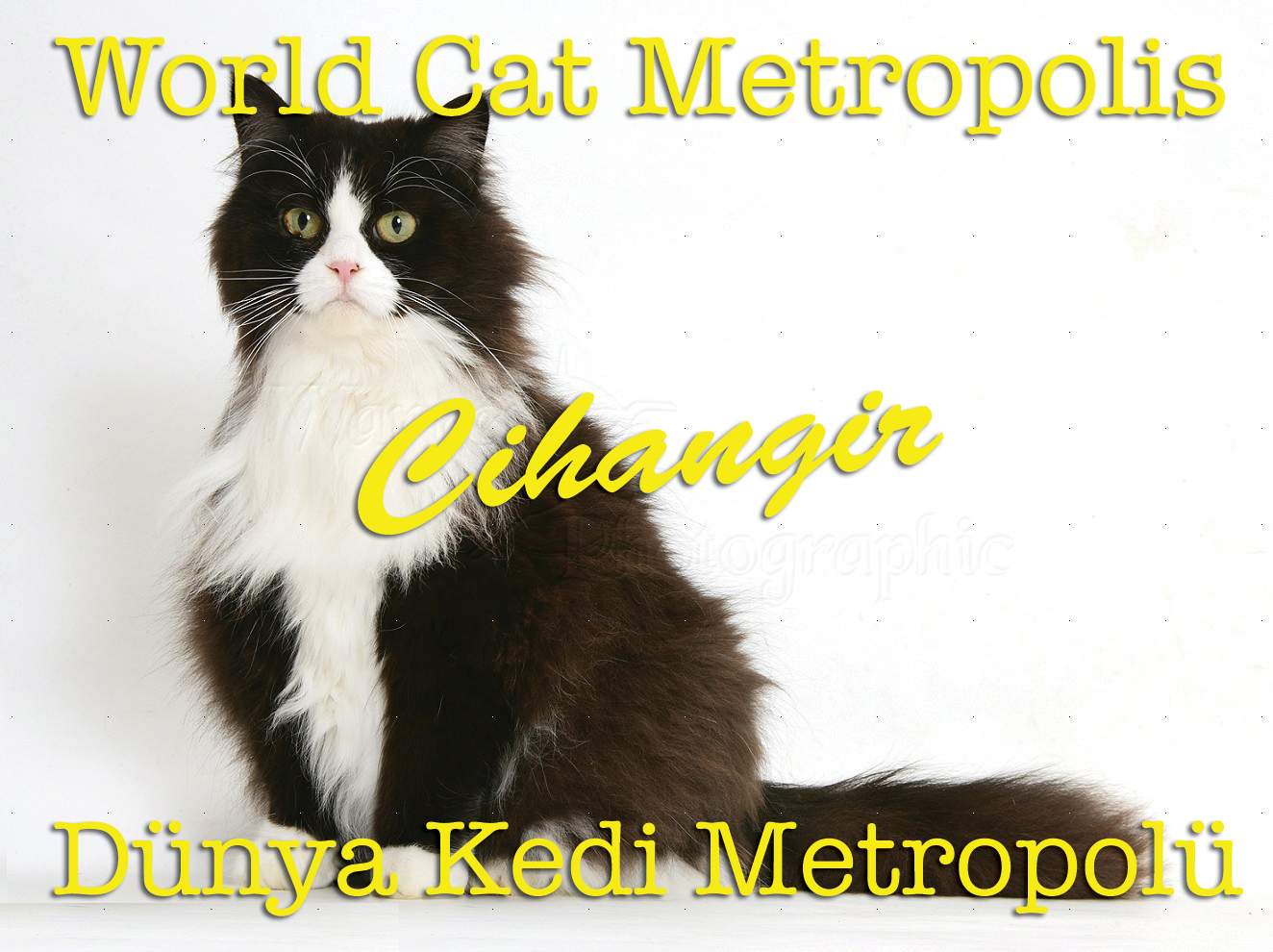 Cihangir World Cat Metropolis